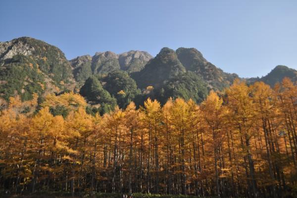 上高地の黄葉